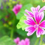 8月14日の誕生花