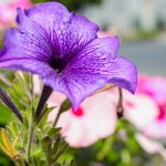 8月16日の誕生花