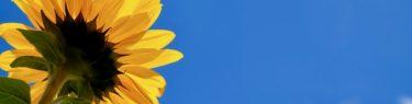 8月25日の誕生花