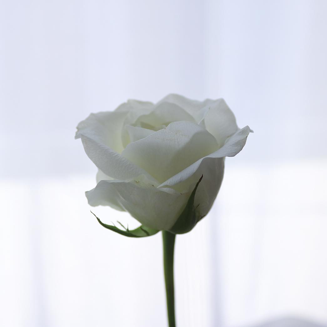 エーテルの花