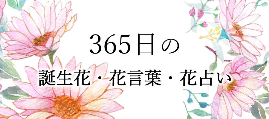 365日誕生花・花言葉・花占い