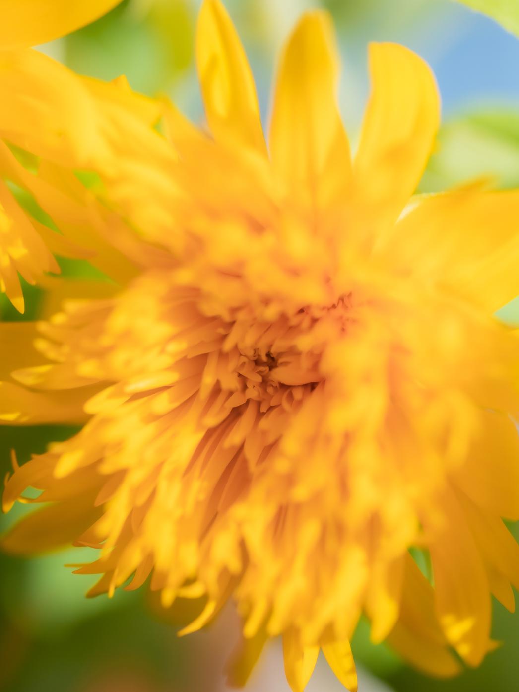 7月の花ひまわり季節のブーケプレゼント
